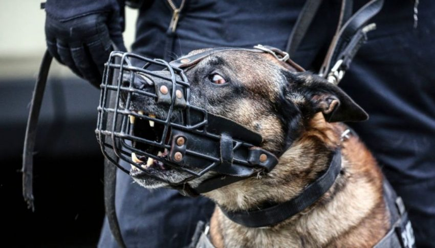 Use these gadgets to stop dogs from barking